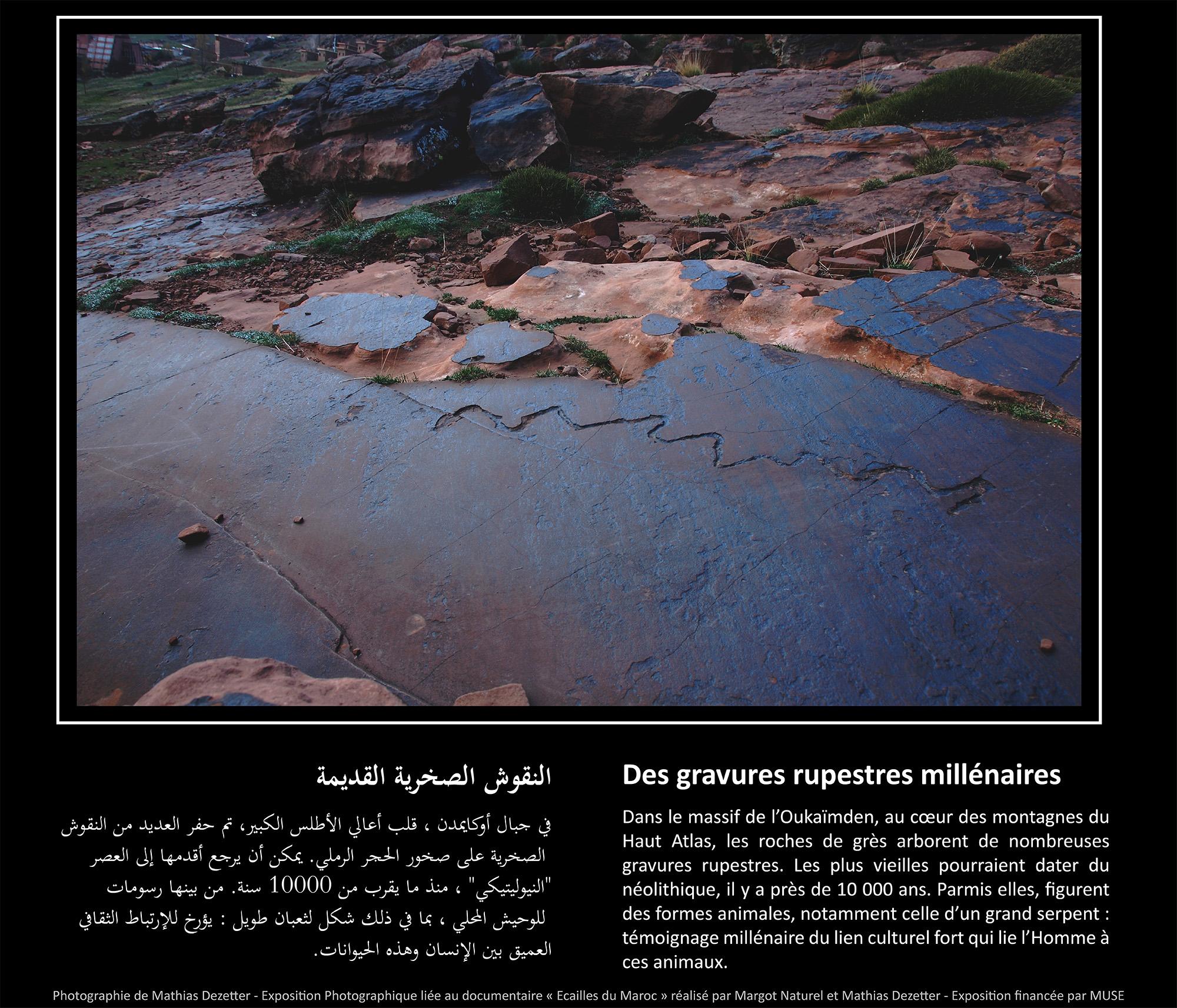Des gravures rupestres millenaires copie