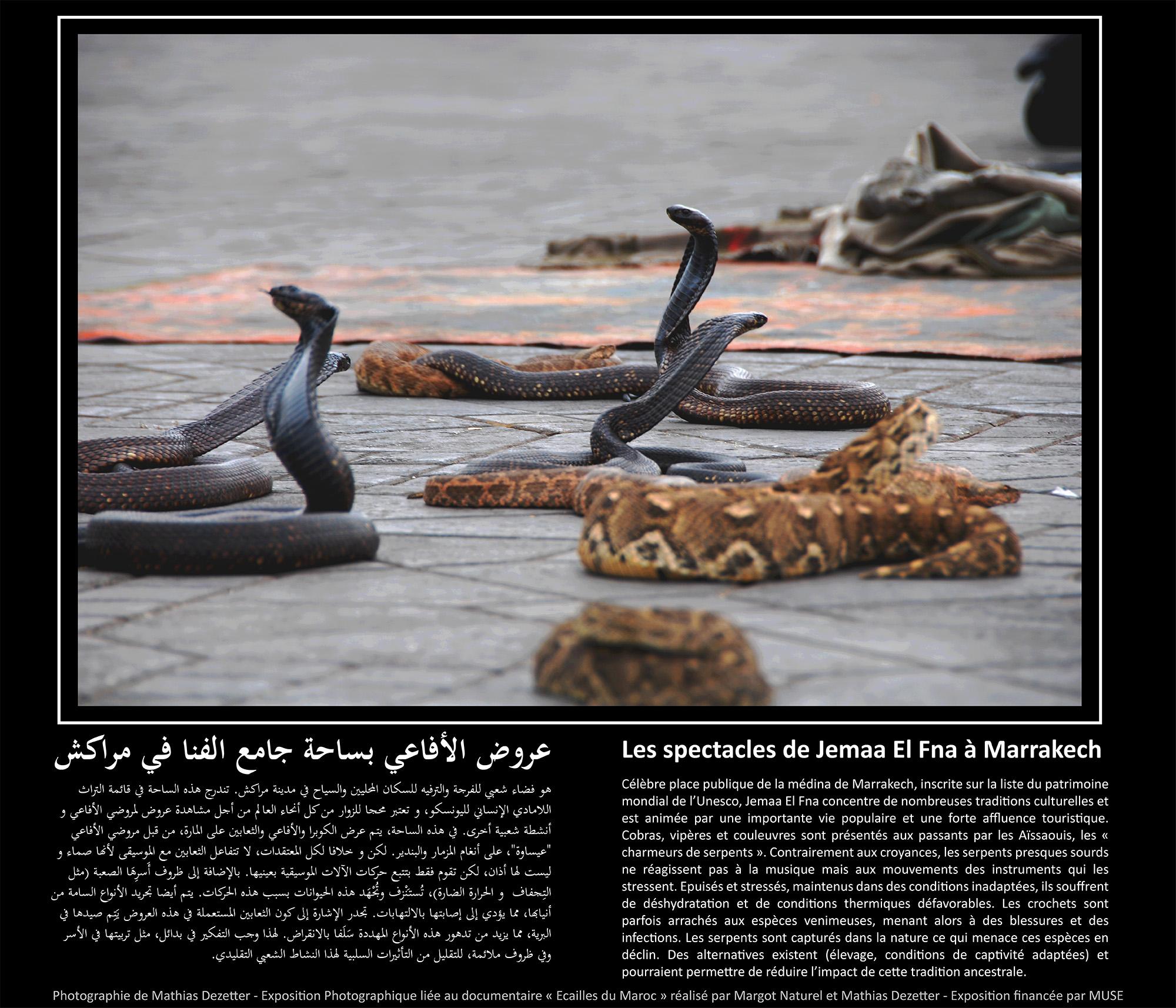 Les spectacles de Jemaa El Fna a Marrakech copie